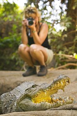 THE GAMBIA  Bakua Tourist photographing a crocodile in the Kachikaly Crocodile Pool  a sacred site for local people Travel Africa The Gambia crocodile wildlife teeth threatening danger African Gambian Western Africa
