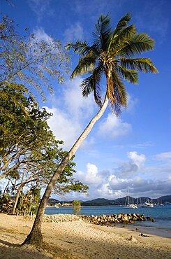 Single coconut palm tree on Pigeon Island National Historic Park beach, Gros Islet, St Lucia
