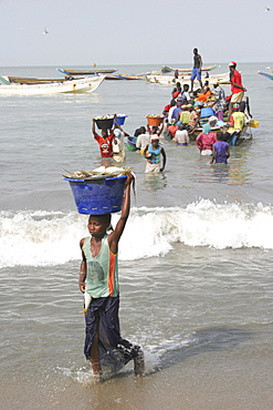 Tanji coast, Women carrying bowls full of fish on their heads through shallow water from fishing boats to beach and the fish market, The Gambian fishing industry is the second largest in Africa, Tanji, Western Gambia, The Gambia