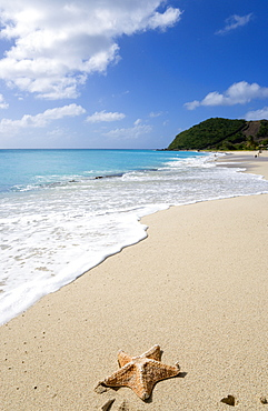 South Glossy Beach in Glossy Bay with a starfish on the sand and waves breaking on the shoreline of the turqoise sea, Windward Islands, West Indies, Caribbean, Central America