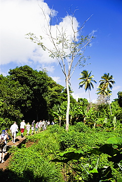 Cruise ship tourists trekking through the jungle interior towards Royal Mount Carmel Waterfall, Caribbean