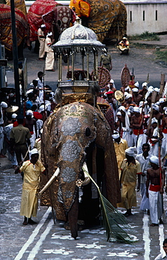 SRI LANKA  Kandy The Esala Perahera honouring the sacred Buddhist tooth relic of Kandy.  The Maligawa Tusker elephant carries a replica of the golden  relic casket. Perahera means procession.
