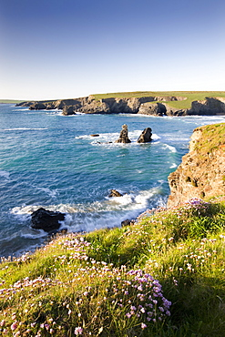 Clifftop view of Porthcothan Bay with spring wildflowers, Cornwall, England, United Kingdom, Europe