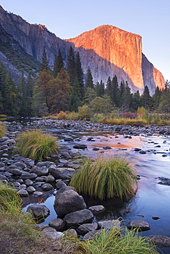 Evening sun setting on El Capitan above the Merced River, Yosemite Valley, Yosemite National Park, UNESCO World Heritage Site, California, United States of America, North America