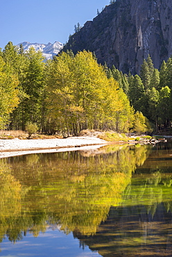 Autumn trees flank the River Merced in Yosemite Valley, California, United States of America, North America