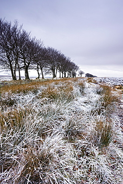 Snow dusted winter landscape by Alderman's Barrow Allotment, Exmoor National Park, Somerset, England, United Kingdom, Europe