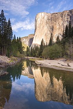 El Capitan reflected in the Merced River in Yosemite Valley, Yosemite National Park, UNESCO World Heritage Site, California, United States of America, North America