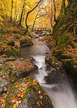 Autumnal foliage surrounding Stock Ghyll Beck near Ambleside, Lake District, Cumbria, England, United Kingdom, Europe