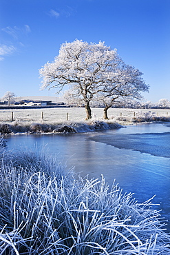 Hoar frosted trees and frozen lake in winter time, Morchard Road, Mid Devon, England, United Kingdom, Europe