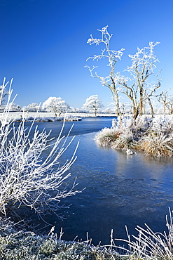 Hoar frosted trees and frozen river in winter time, Morchard Road, Devon, England, United Kingdom, Europe