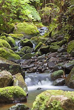 Stream on Kauaeranga Kauri Trail, Thames, Coromandel Peninsula, Waikato, North Island, New Zealand, Pacific