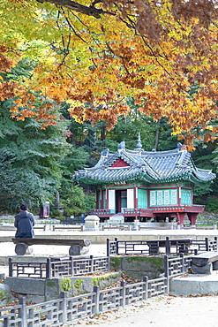 Man sitting in Secret Garden in Changdeokgung Palace, UNESCO World Heritage Site, Seoul, South Korea, Asia