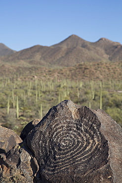 Petroglyphs, created by the prehistoric Hohokam people, about 1000 years ago, West-Tucson Mountain District, Saguaro National Park, Arizona, United States of America, North America
