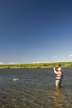 Fly fisherman with fish on line, Alagnak River, Alaska, United States of America, North America