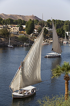 Feluccas sailing on the River Nile, Aswan, Egypt, North Africa, Africa