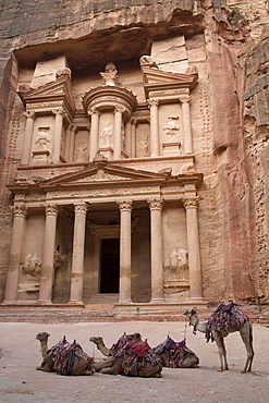 Camels in front of the Treasury, Petra, UNESCO World Heritage Site, Jordan, Middle East