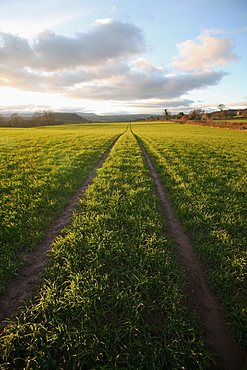 An old lane almost overtaken by grass in a field near Peterchurch, Golden Valey, Herefordshire, England, United Kingdom, Europe