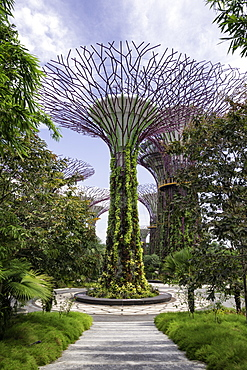 The Supertrees in the Garden By The Bay in Singapore, Southeast Asia, Asia