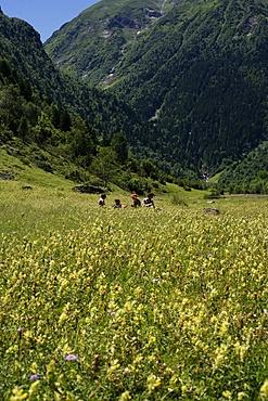 Family picnic, Hautes Pyrenees, France, Europe