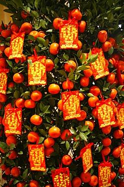 Tangerine good luck symbols, Chinese New Year decoration, Macao, China, Asia