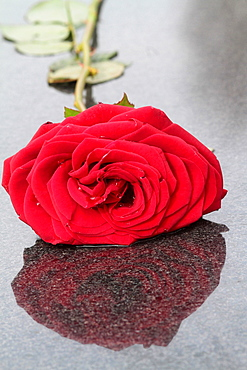 Shadow of a red rose placed on a tombstone, Pere Lachaise cemetery, Paris, France, Europe