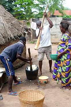 Men pounding cassava in a wooden pot with a stick to make flour, Datcha, Togo, West Africa, Africa
