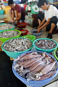 Fish market, squids and shrimps for sale, Ha Tien, Vietnam, Indochina, Southeast Asia, Asia