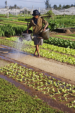 Man watering in newly planted seeds in a market garden, Ha Lam, Vietnam, Indochina, Southeast Asia, Asia