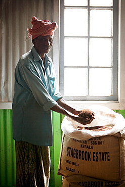 Tea plantation worker with sack of fresh tea, Kerala, India, Asia