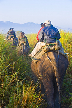 Tourists on elephants, Kaziranga National Park, UNESCO World Heritage Site, Assam, Northeast India, India, Asia