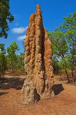Termite mound in the Litchfield National Park, Northern Territory, Australia, Pacific