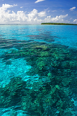 Beautiful turquoise water in the Ant Atoll, Pohnpei, Micronesia, Pacific