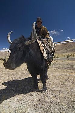 Man riding a yak, Pamir Highway, Tajikistan, Central Asia, Asia