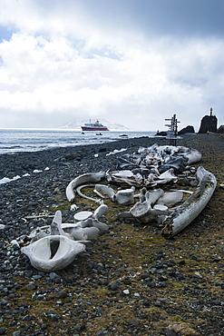 Old whale bones in the beach near the Henryk Arctowski Polish Antarctic Station, King George Island, South Shetland Islands, Antarctica, Polar Regions