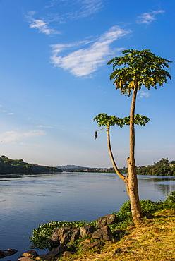 Source of the Nile in Jinja, Uganda, East Africa, Africa