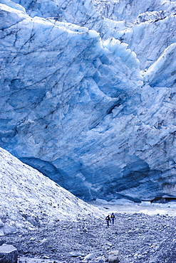 Tourist hiking to the giant glacial outflow of Fox Glacier, Westland Tai Poutini National Park, South Island, New Zealand, Pacific