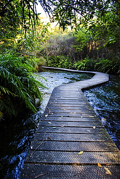 Boardwalk in Te Waikoropupu springs declared as clearest fresh water springs in the world, Takaka, Golden Bay, Tasman Region, South Island, New Zealand, Pacific