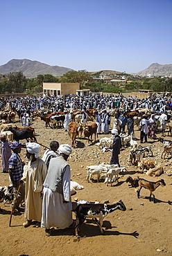 The Monday animal market of Keren, Eritrea, Africa