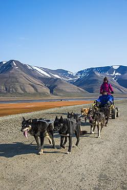 Husky dog sledding on wheels, Svalbard, Longyearbyen, Norway, Scandinavia, Europe