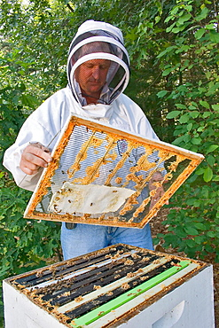 Queen excluder used between supers ( single boxes ) to isolate queen bee in lower portion of hive from honey bearing supers which are to be harvested, Paper towel which has been soaked in mineral oil, is used to help the bees combat mites. - 817-105939