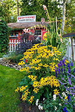 Black_eyed Susans, small pond in country garden w/ grass path leading to cottage bkgnd bkgnd (Rudbeckia 'Goldsturm'; Cotinus coggygria 'Purpurea'; Gladiolus cv.), Beebe, Blaine, WA.