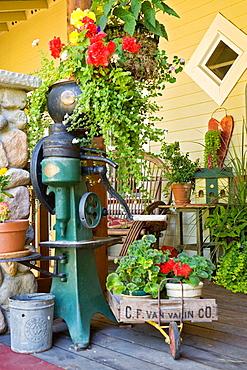Antiques, plants in containers, twig chair on front porch (Begonia cv.; Pelargonium cv.; Sutera cordata; Solenostemon scutellarioides), Beebe, Blaine, WA.