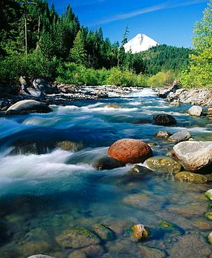 East Fork Hood River and Mt, Hood at background, Mt Hood National Forest, Hood River County, Oregon, USA