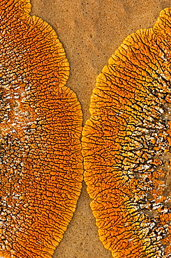 Orange lichen colony on sandstone concretion boulder face