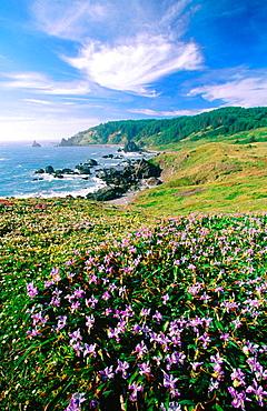 Cape Ferrelo, Samuel H, Boardman State Park, Oregon, USA
