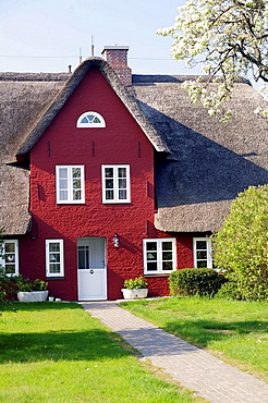 Front view of traditional northfrisian house build of red brinks, thatched roof with green grass in the foreground and blue sky, Island of Amrum, Northfrisian, Schleswig_Holstein, Northern Germany, Europe