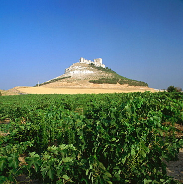 Ribera del Duero vineyards and castle, Penafiel, Valladolid province, Castilla-Leon, Spain