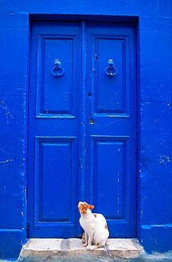 Cat in the medina of Susah, Tunisia