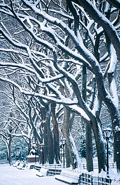 Snow in Central Park, New York City, USA - 817-151756