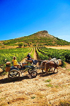 Driving calash in Comenge winery vineyards in the Ribera del Duero wine region, Curiel de Duero, Valladolid province, Castilla-Leon, Spain